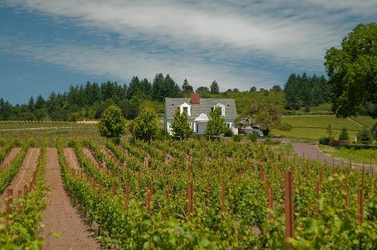 Stoller Vineyards Guest Houses: Thinking of spending a few days in wine country? Stay with us!