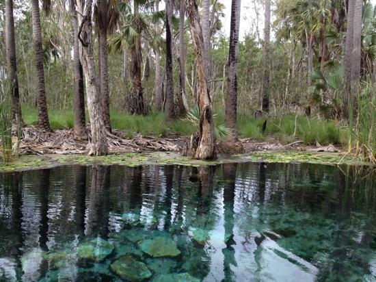 Mataranka, Australia: Bitter Springs