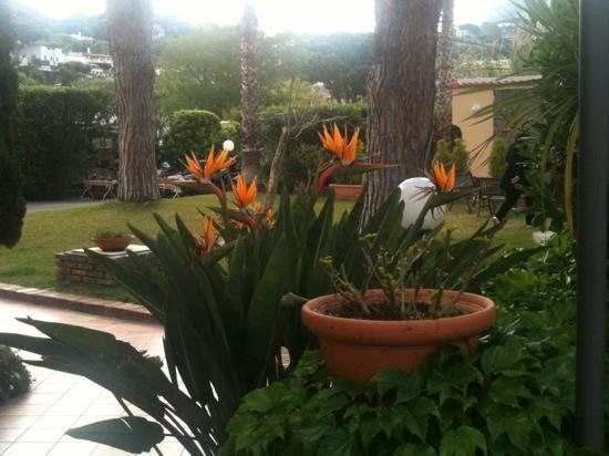 Family Spa Hotel Le Canne: giardino