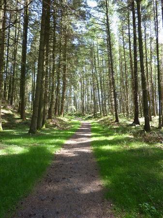 Galloway Forest Park: Wildlife rich woodland
