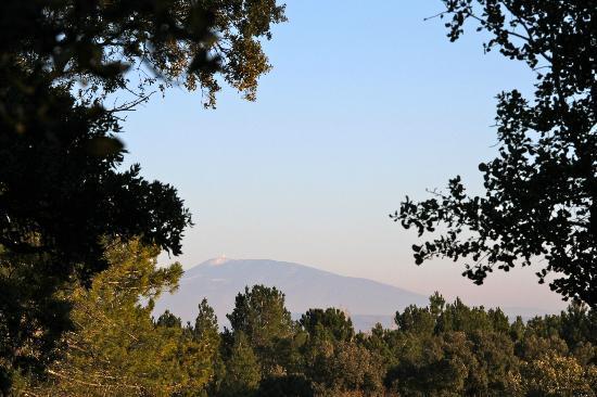 Lutopie: Vue du jardin sur le Mont Ventoux