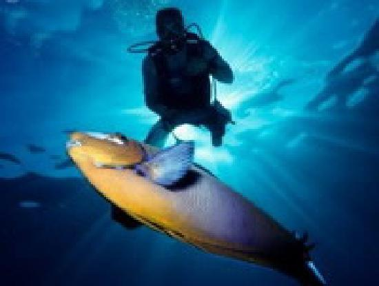 Sharm Holiday Day Tours: Aqua Marine