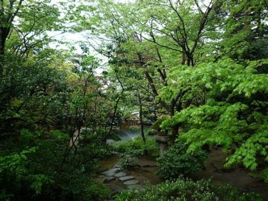 Kansuiro: お庭の新緑が見事でした。