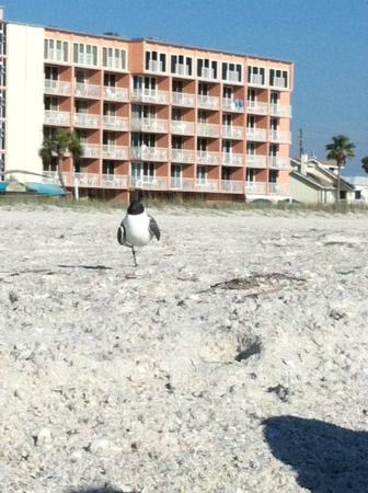 أيلاند إن بيتش ريزورت: On the beach! Back of Island Inn