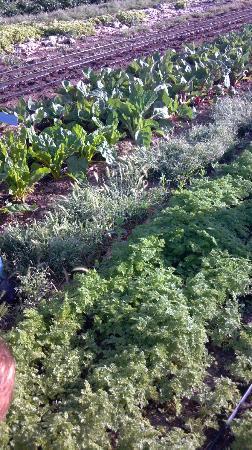 Rancho La Puerta Spa: Organic Veg garden