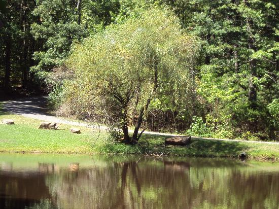Tanyard Springs Cabins: Our beautiful pond