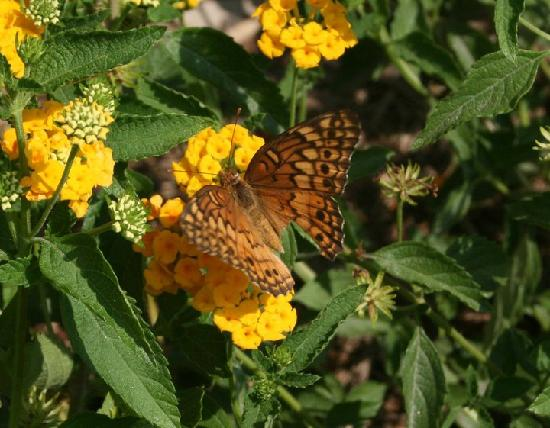 Cherrystone Family Camping Resort: Butterfly