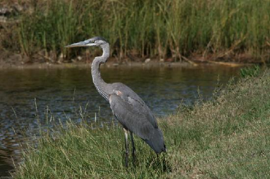 Cherrystone Family Camping Resort: Blue Heron
