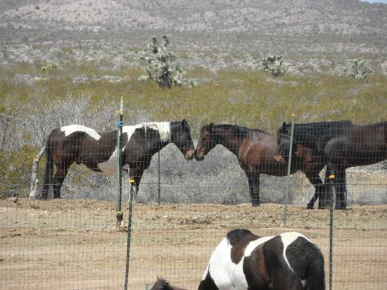 Stagecoach Trails Guest Ranch: Just a couple of the horses