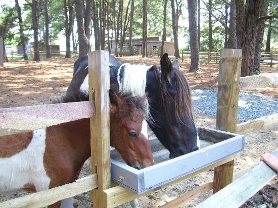 Refuge Inn: On-site ponies