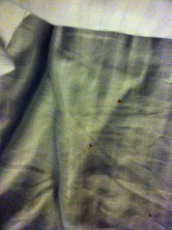 La Quinta Inn & Suites Wenatchee: Dirty sheets with debri in bed.... enlarge pic to see debri