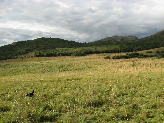 Caballos De Luz: More Land (and the dog!)