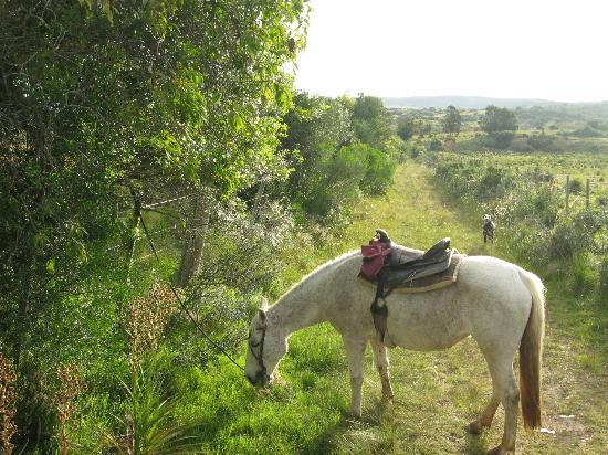 Caballos De Luz: Pony.