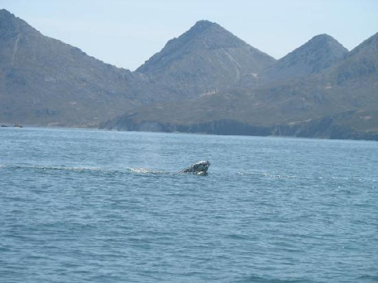 Whalesong Bed and Breakfast: Humpback whale sighting