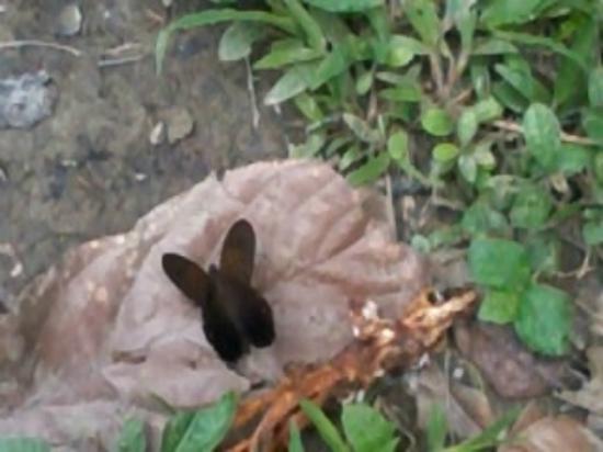 Yacuma Ecolodge: Mariposa