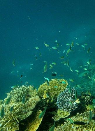 Embudu Village: House reef