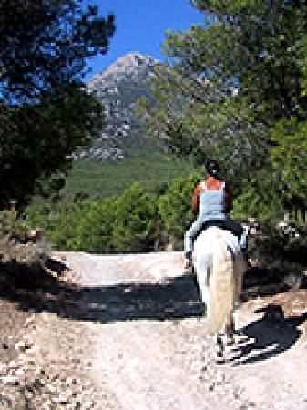 Alicante, Espagne : Horse Riding Excursíon with Rancho La Ofra