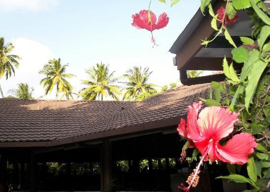 Embudu Village: Restuarant