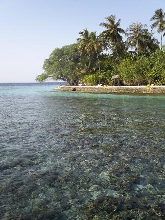 Embudu Village: Beach / Coral from main jetty
