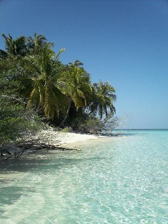 Embudu Village: Beach