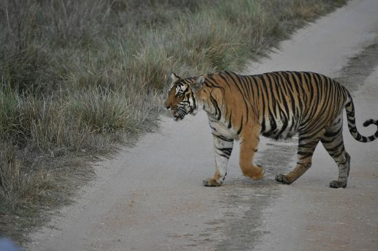 Mandla, Индия: The majestic walk...