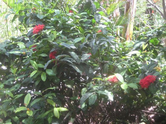 Rumah Purnama: gardens
