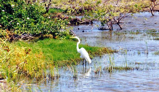 The Bubali Bird Sanctuary