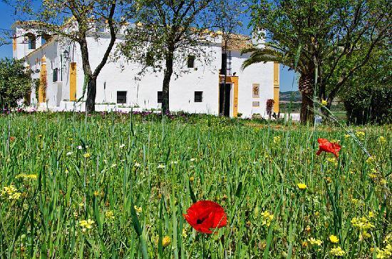 Hacienda El Santiscal: Primavera 2012 a la entrada