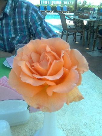 Kris Apartments: dagelijks verse bloemen