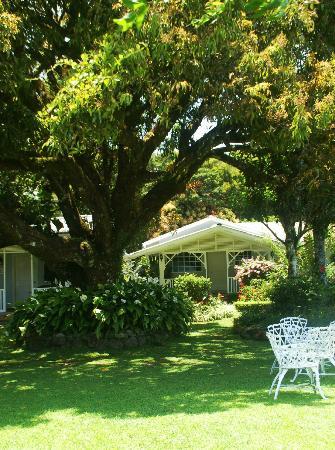 Hotel Panamonte: Garden Jr. Suite #3 through the garden trees.