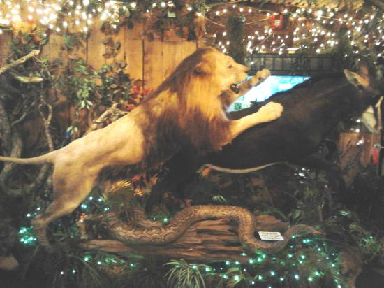 Lion on the attack picture of clark 39 s fish camp for Clark s fish camp seafood restaurant