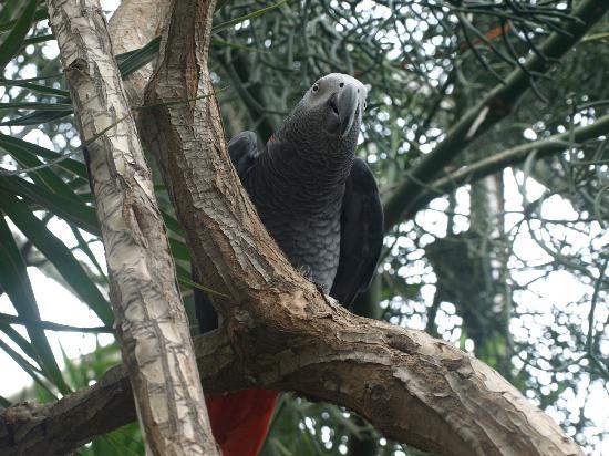 Queen Elizabeth Park: A persistent parrot in the Bloedel Conservatory