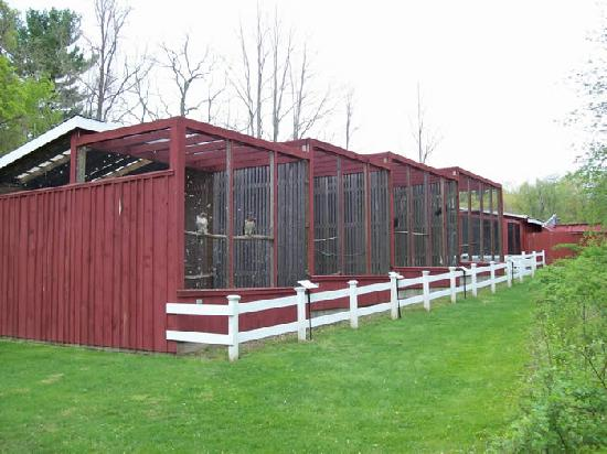 Sharon Audubon Center: Raptor Aviaries