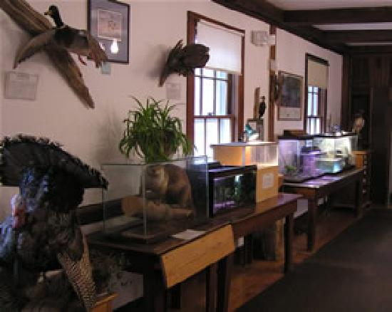 Sharon Audubon Center: Visitor Center with seasonal and changing exhibits