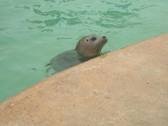 Natureland Seal Sanctuary: Hungry seal
