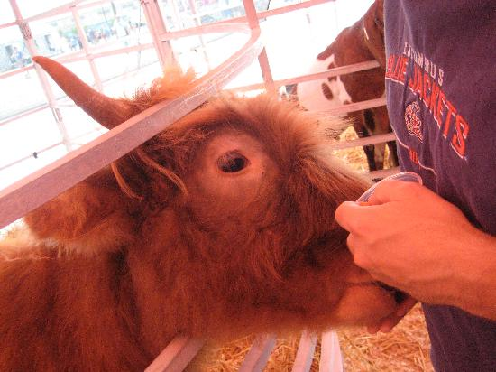 The Ohio Expo Center & State Fair: petting zoo