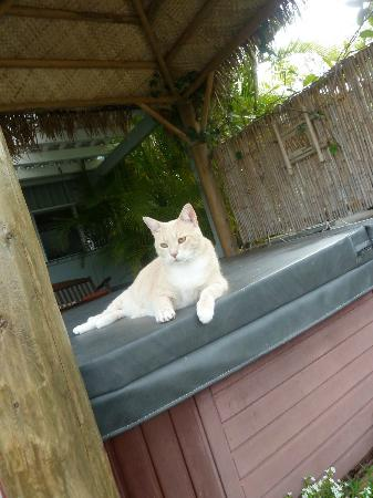 Silver Oaks Ranch: sweet kittie on hot tub which was so good!