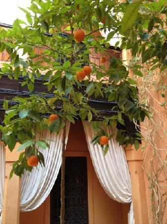 Riad Hermes: oranger au plein centre du Riad