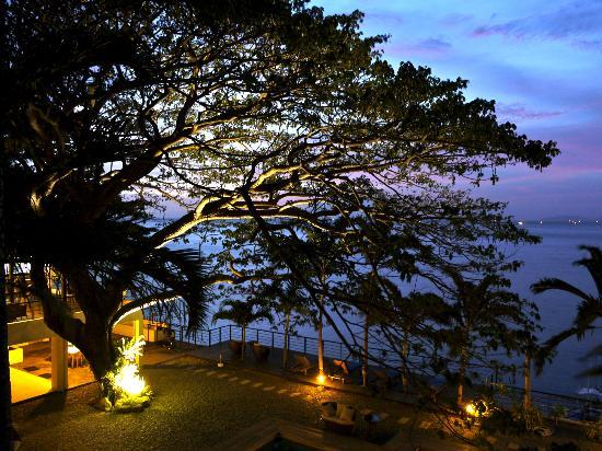 Acacia Resort and Dive Center: The gorgeous acacia tree as the resort's centerpiece