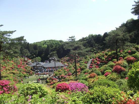 Ome, Japan: 上からの眺め  一番綺麗では・・・