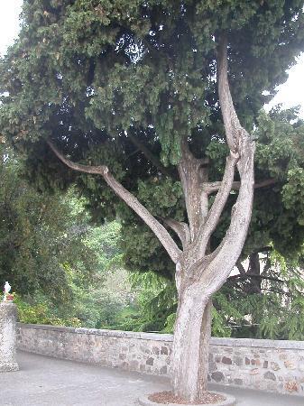 Arqua Petrarca, Italia: Vicino alla tomba del Petrarca