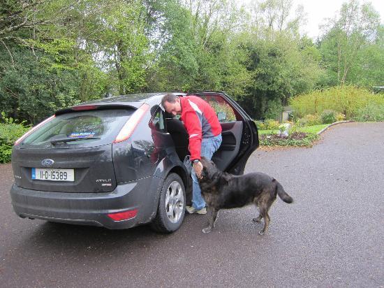 Watersedge Kenmare: L'accoglienza calorosa della cagnolona