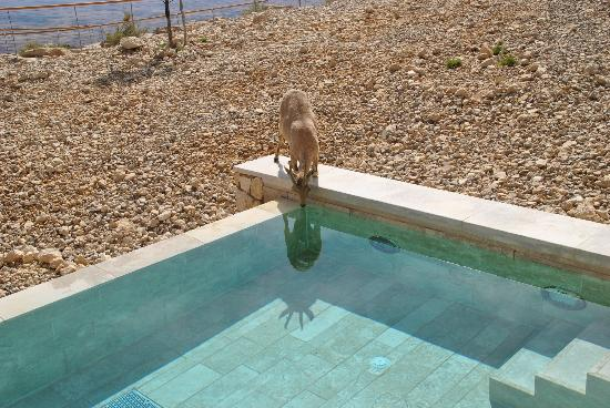 Beresheet Hotel by Isrotel Exclusive Collection: Ye'ela drinking water from our private pool - so cool