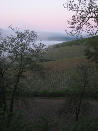 Fattoria Poggerino: View