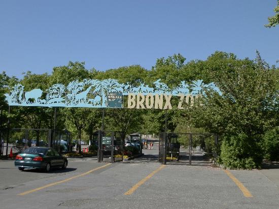 The Bronx Tour