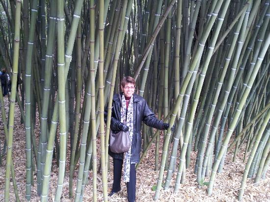Château de Flaugergues : Le Bamboo