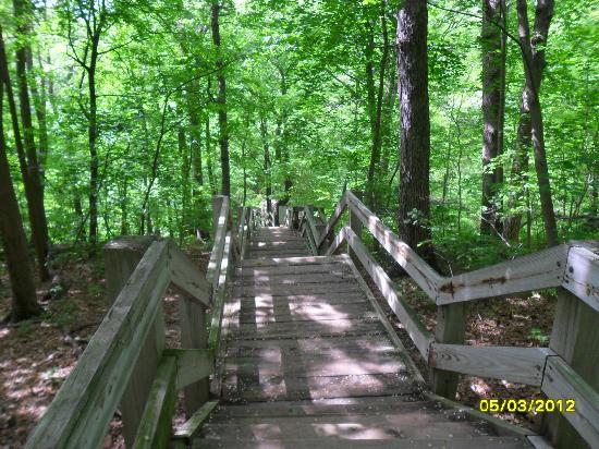 Matthiessen State Park: stairs