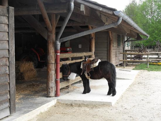 Disney's Davy Crockett Ranch: Poney