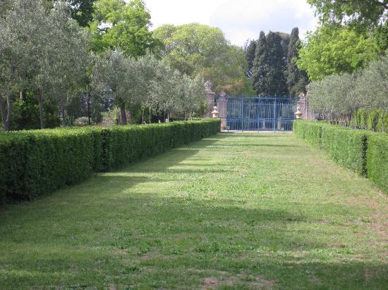 Château de Flaugergues : ALLEE OLIVIERS