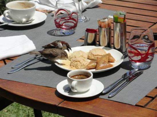 Sofitel Marrakech Lounge and Spa : Même les oiseaux aiment le brunch.